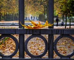 Parc Royal (143/365)